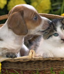 Animals___Various_together_Puppy_and_kitten_032311_1